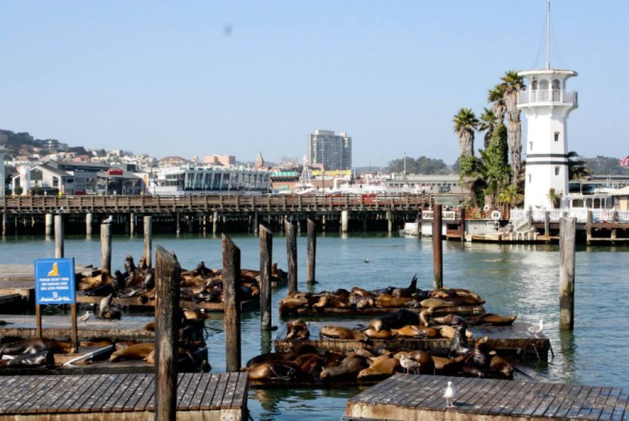Pier 39, leões marinhos