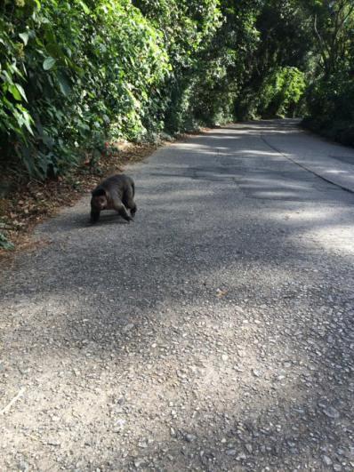 Macaco prego na estrada
